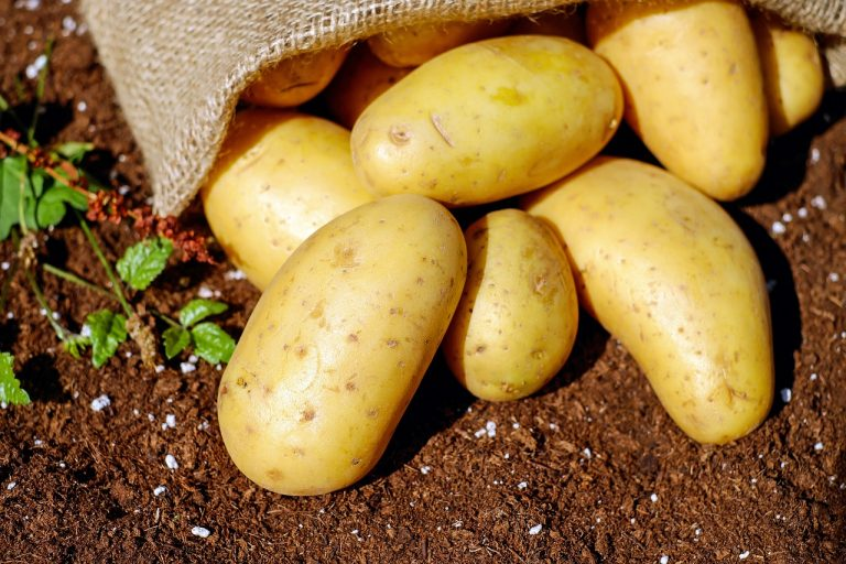 New method reveals whether your potato is organic or not